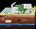 Carbon Capture Infographic