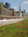 Green Roof in Manhattan - Wade McGillis