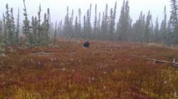 picarro-permafrost-figure1.jpg