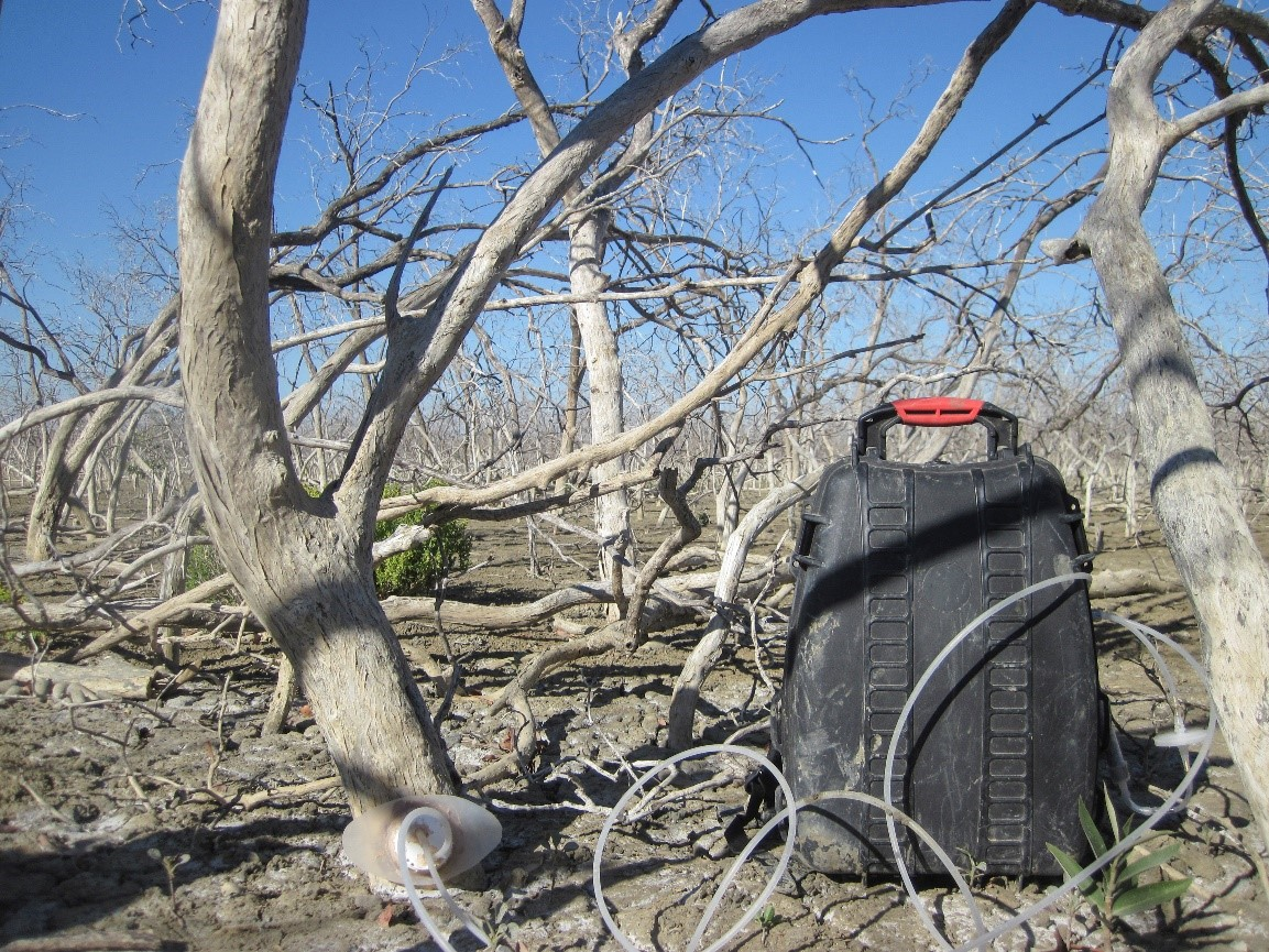 Measuring tree stem emissions from remote dead tropical-arid mangroves